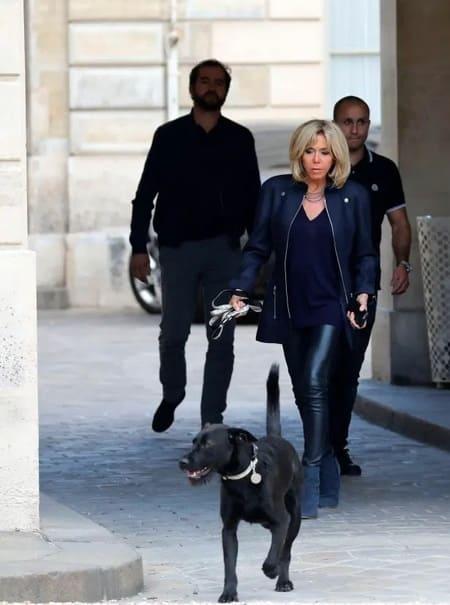 Прогулки с лабрадором Немо - часть тренировок мадам Макрон